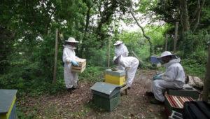 emeraude id rucher ecole