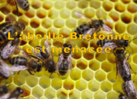 abeille emeraude id